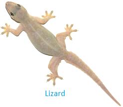 Lizard Living on Trees