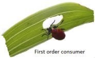First Order Consumers