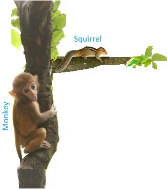 Animals Living on Trees