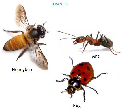 U N Insects Animals Around Us | Pe...