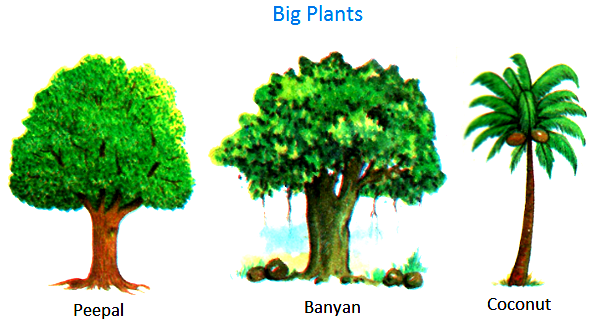 Plants around us big small plants shrubs herbs for Different types of plants and trees