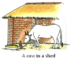 A Cow in a Shed