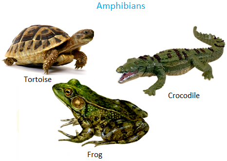 Amphibians Animals Names