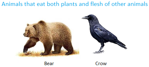 Animals that Eat both Plants and flesh of other Animals