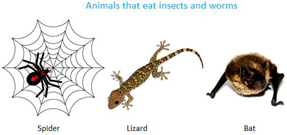 Animals that Eat Insects and Worms
