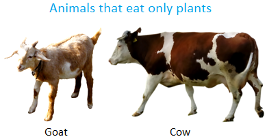 Animals that Eat Only Plants