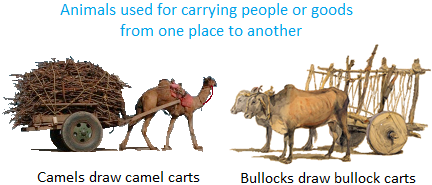 Animals used for Transport, Ploughing, etc.