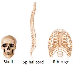 Bone Structures