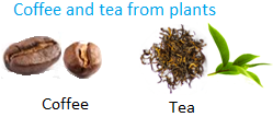 Coffee and Tea from Plants