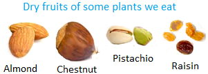 Dry Fruits of some Plants we Eat