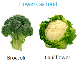 Flowers as Food