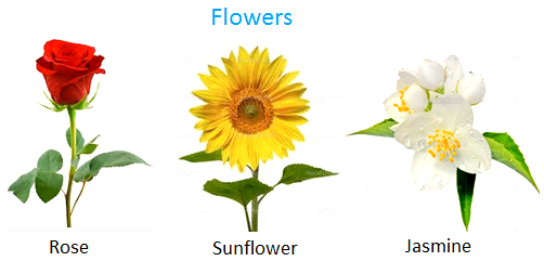 Some of the good smelling flowers are rose, jasmine, lotus, sunflower, apple flower.