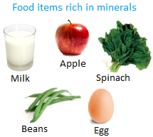 Food Items Rich in Minerals