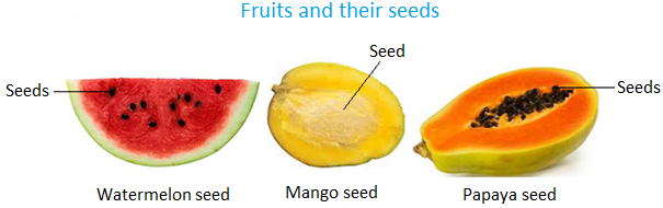 Some of the fruits which contain seeds are mango, apple, orange, watermelon and papaya.