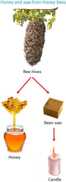 Honey and Wax from Honey Bees