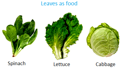 Leaves as Food