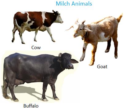 Milch Animals