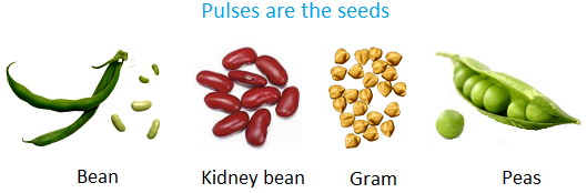 Pluses are the Seeds