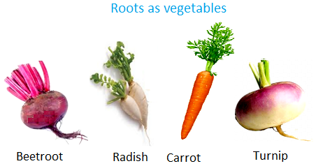 Food from Plants | Roots as Vegetables | Leaves as Food ...