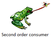 Second Order Consumers