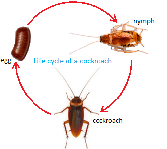 Insects That Lay Eggs also Wheat Growth Stages likewise Avocado Mexico Deforestation besides Leading The Team additionally The Life Cycle Of Cotton. on plant life cycle stages
