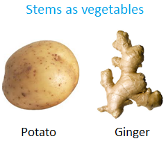 Stems as Vegetables