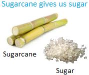 Sugarcane gives us Sugar