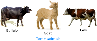 Tame Animals