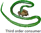 Third Order Consumers