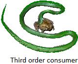Third Order Consumers