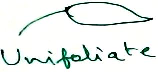 Unifoliate