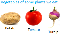 Vegetables of some Plants we Eat