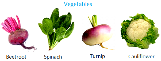 food from plants roots as vegetables leaves as food stems as