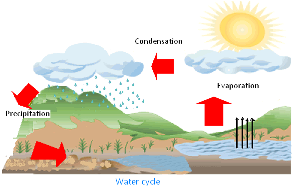 water cycle diagram and explanation   free collection of pictures        water cycle diagram with explanation on water cycle diagram and explanation