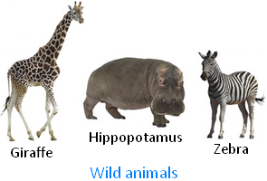 Wild Animals Picture