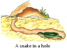 A Snake Lives in a Hole