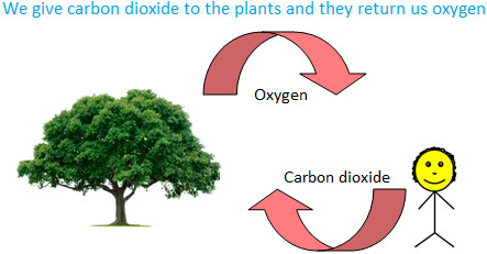Carbon Dioxide to the Plants and they return us Oxygen