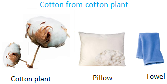 Cotton from Cotton Plant