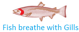 Fish Breathe with Gills