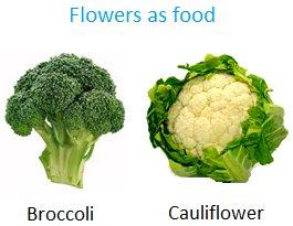 Flowers as Food