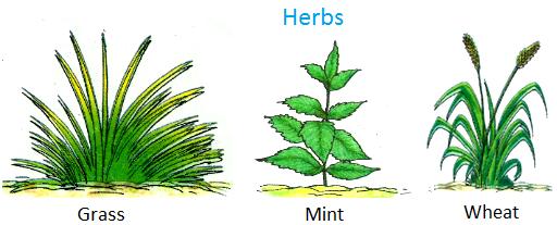 Herbs, Grass, wheat, sunflower, lady's finger