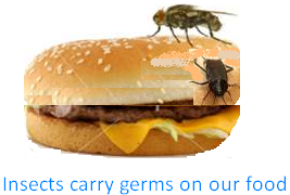 Insects Carry Germs on Our Food