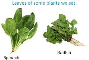 Leaves of some Plants we Eat