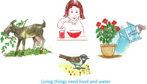 Living Things Need Food and Water