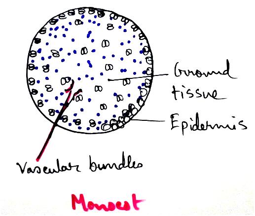 Monocot