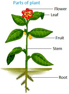 The main parts of most plants are roots, stem, leaf and flower.