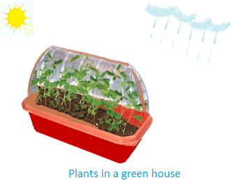Plants in a Green House