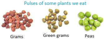 Pulses of some Plants we Eat