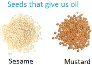 Seeds that give us Oil