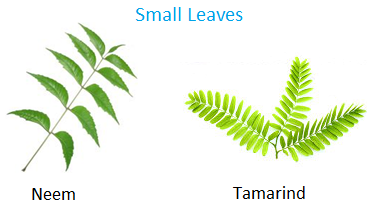 Neem and tamarind have small leaves.